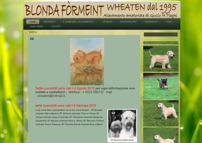 Allevamento amatoriale IRISH SOFT COATED WHEATEN TERRIER
